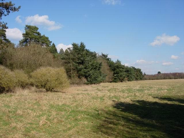 Edge of Meadow Close Copse