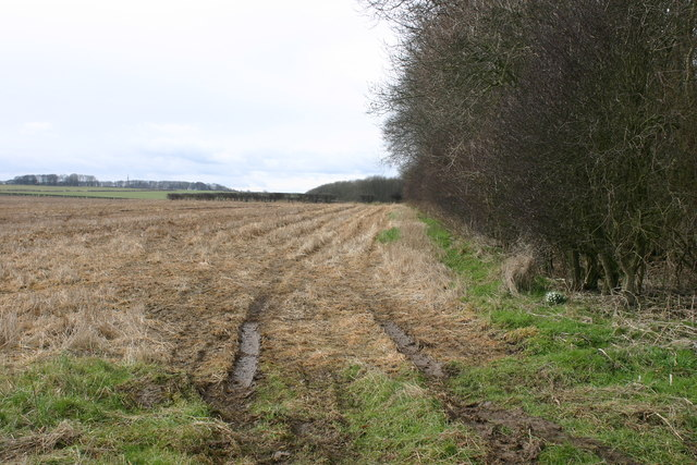 Farmland near Thwing