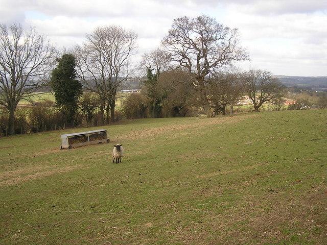 Field near English Bicknor