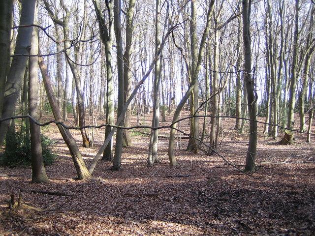 Belsize: Woodman's Wood