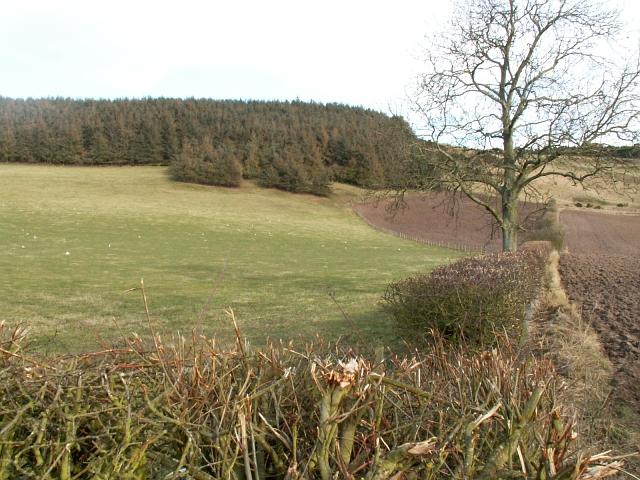 Farmland and trees by Fernie