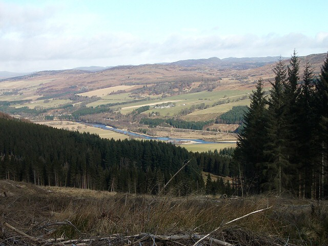 Craigvinean Forest clearing