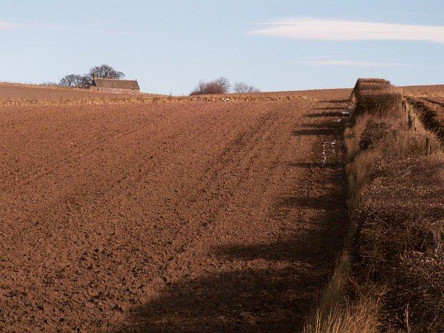 Farmland by Moonzie