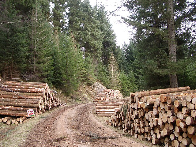 Timber in Craigvinean Forest
