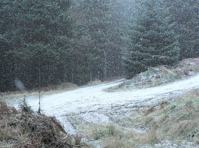 Snow shower in Craigvinean forest