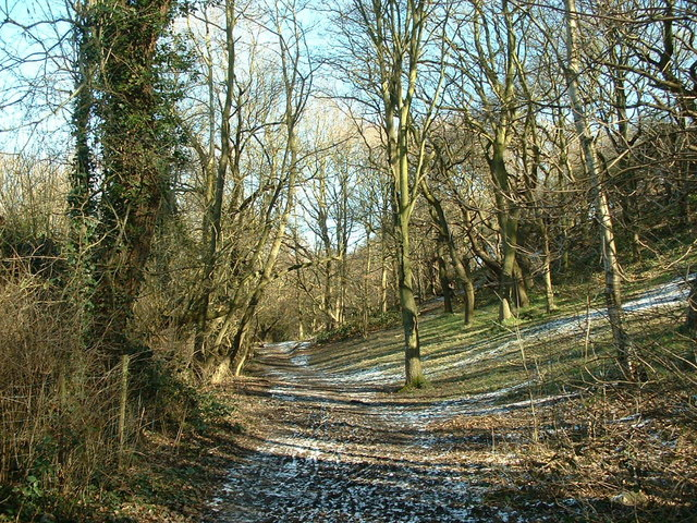 Woodland path near Coxley
