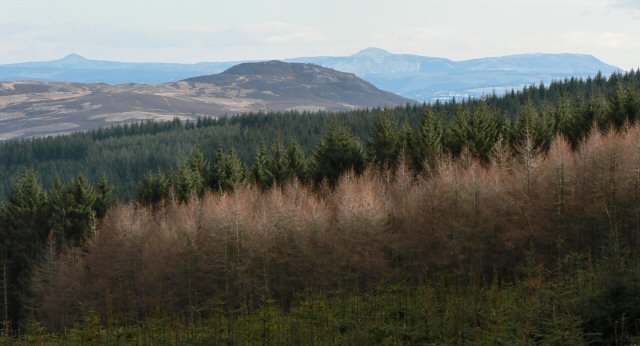 Over Craigvinean Forest to the Lomond Hills