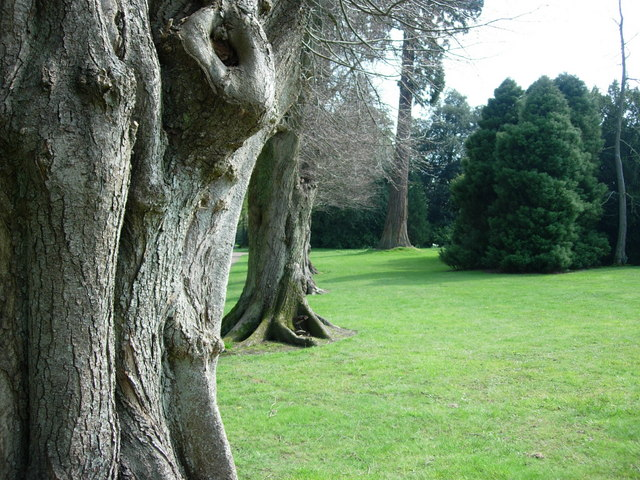 Nymans Gardens-row of trees