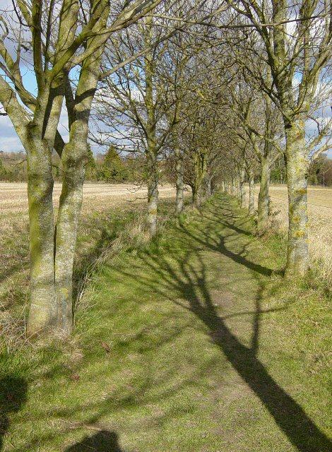 Public Footpath through Farmland.
