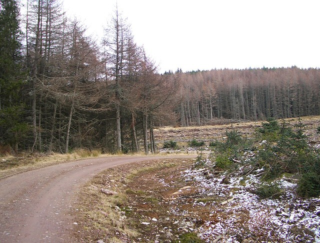 Track through Craigvinean Forest