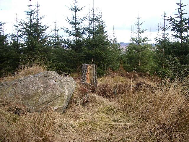 Craigvinean Forest near Dalguise