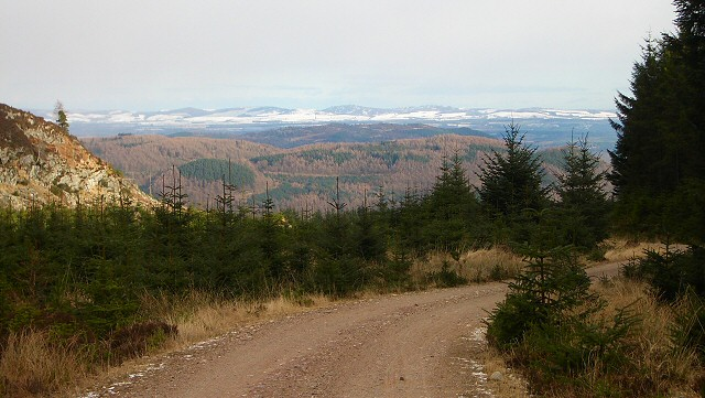Rounding a bend in Craigvinean Forest