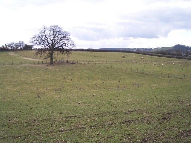 Sheep Pasture near Broughtons