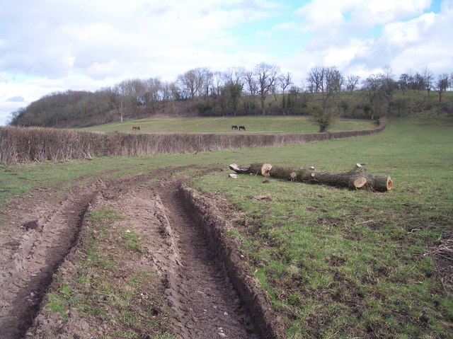 Pasture at Adsett Farm