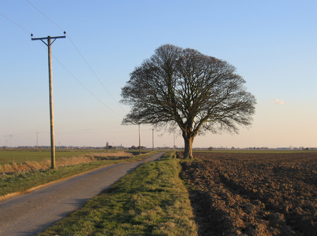 Lone tree, Taumberland, Swineshead, Lincs