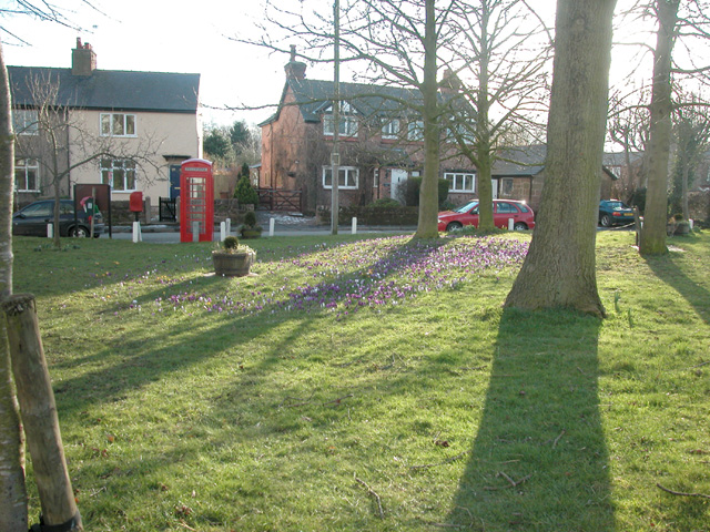Crocus Time in Puddington