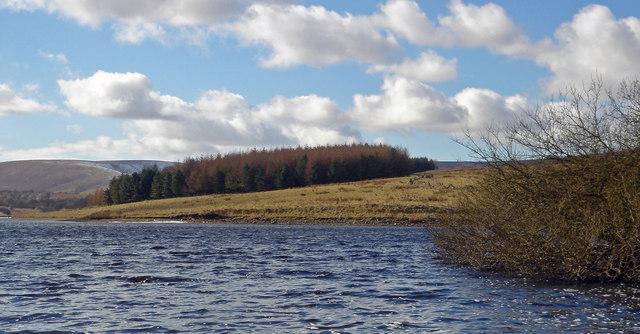 Wood on western shore of Stocks Reservoir