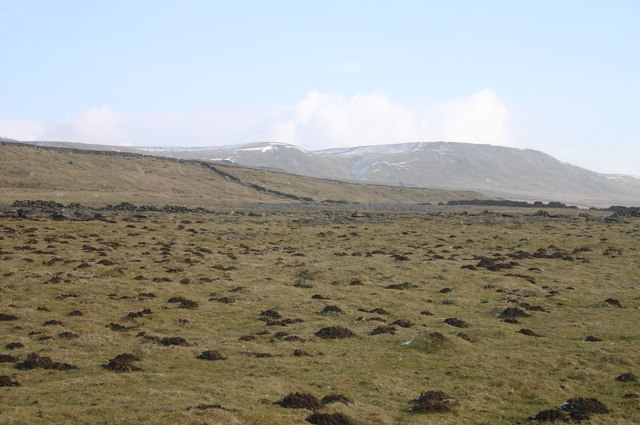Moles on Stainmore