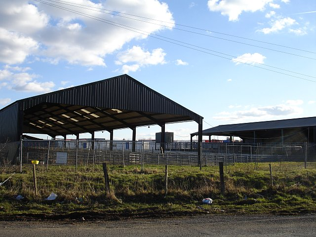 Maidstone cattle auctions