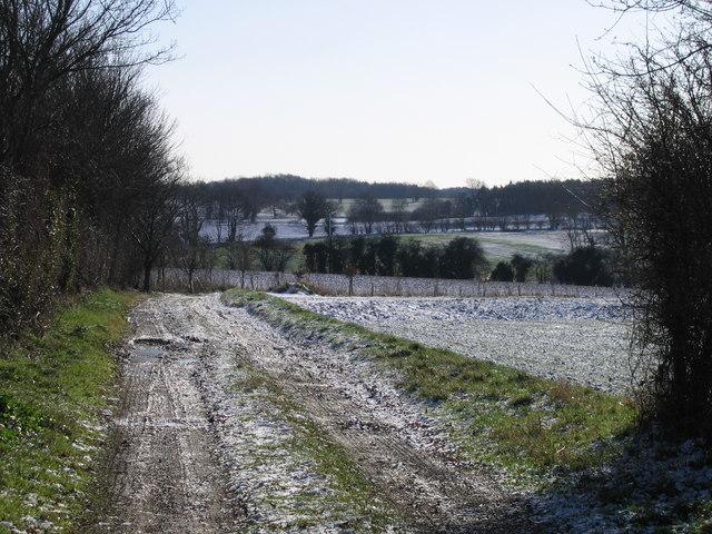 Fields between Bramerton and Surlingham