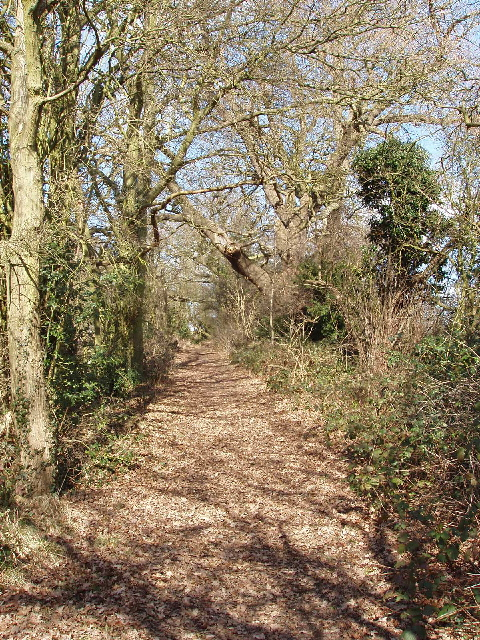 Footpath through oak trees, Holecombe Dale, Barnet