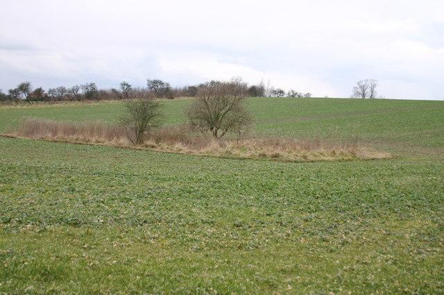 Overgrown Pond, Church Lane