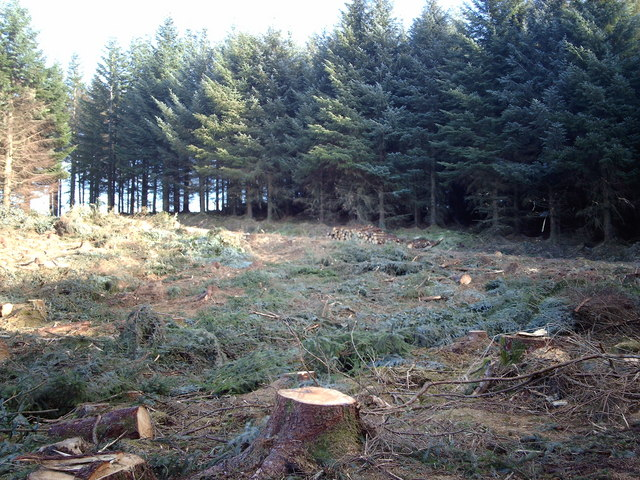 Tree Harvesting in Leapmoor Forest