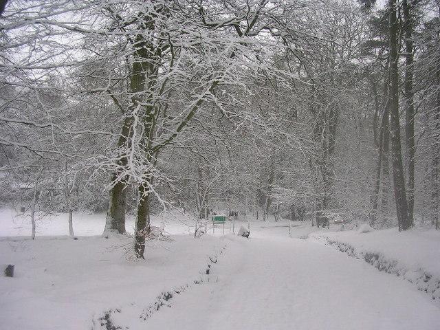 Hazlehead woods in winter