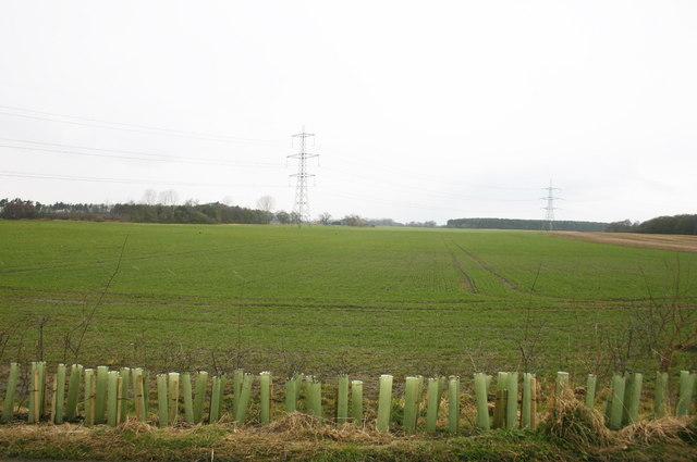 New Hedge and Farmland