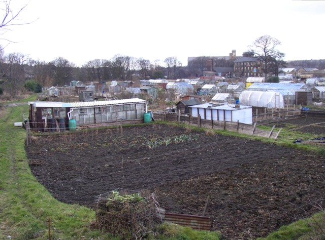Allotments alongside Hopton New Road, Mirfield (SE203192)