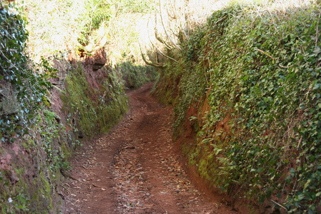 Wiveliscombe Without: sunken lane near Grant's Farms