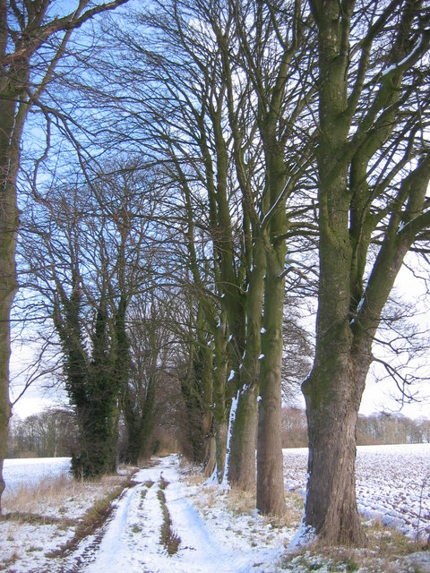 Tree Lined Track/Bridleway