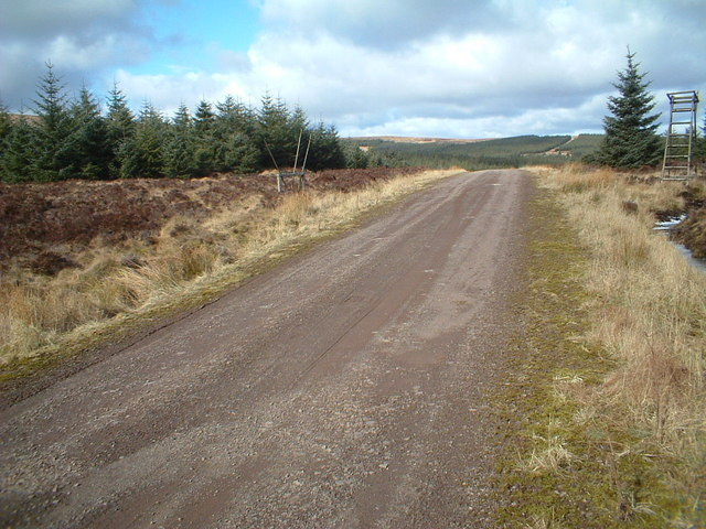 Forest track near White Hill