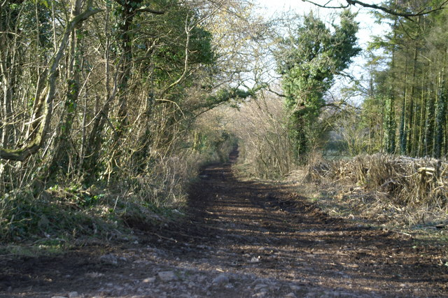 Track on Backwell Hill