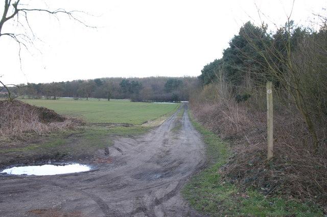 Track at Clayflat Plantation