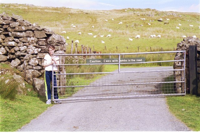 Gated road in sheep country