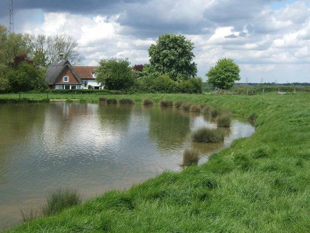 Wacton Common Pond