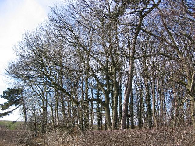 Wood at SE801626
