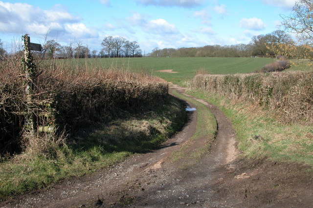 Footpath to Knight's Grove