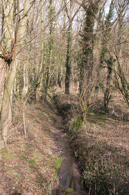 Ditch flowing through Dean's Wood, near Ombersley
