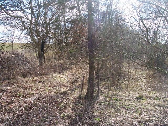 Inside Ash Covert near Crickley Barrow Farm