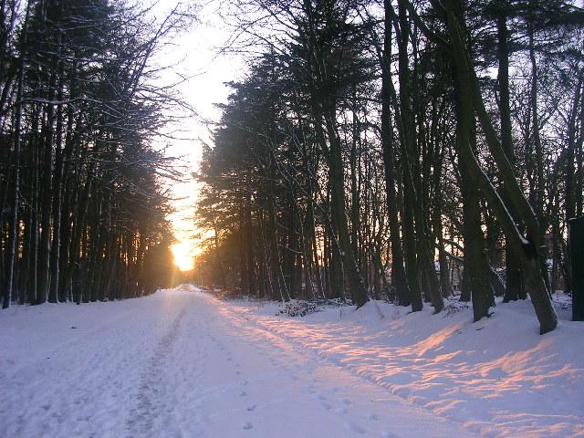 Winter sun on the road to Hazlehead Park