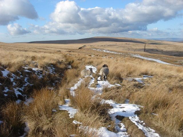 Winter Hill Flats