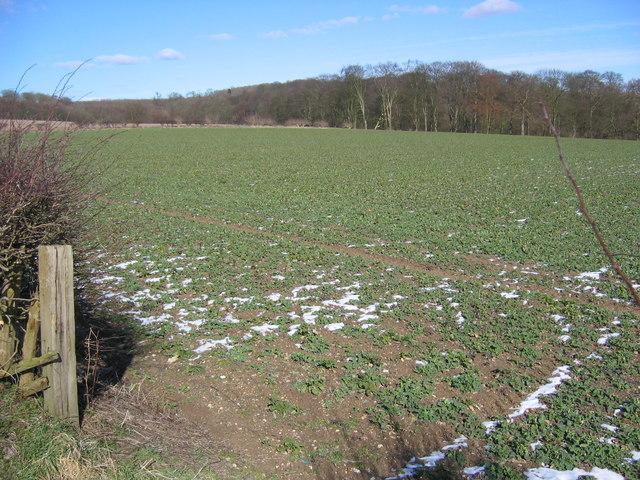 Londesborough - Field