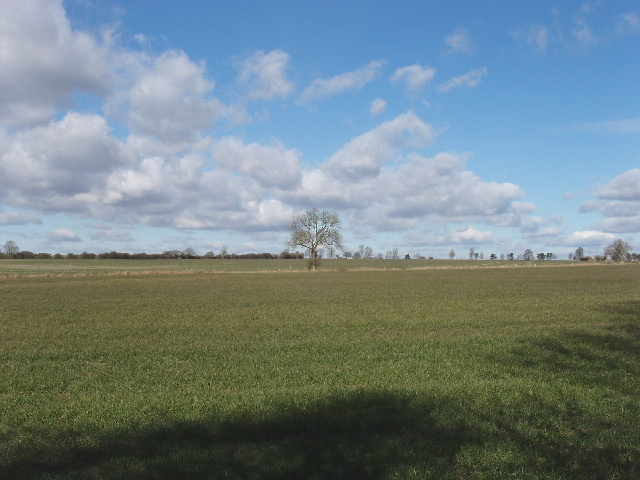 Field by Old Ridgeway, Draycot Foliat