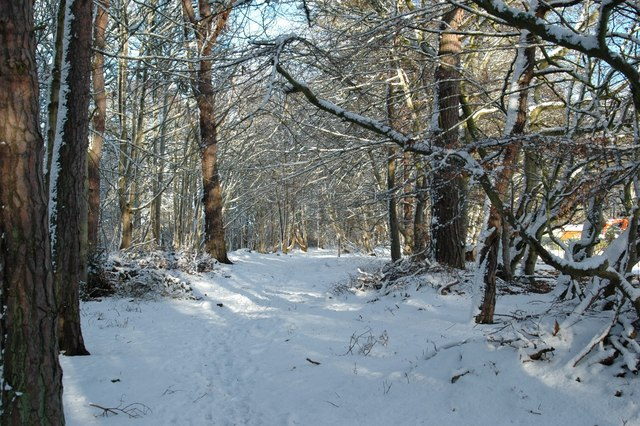 Dornoch - Earls Cross Wood