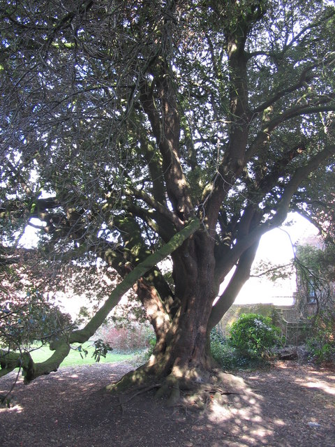 The Holme Oak