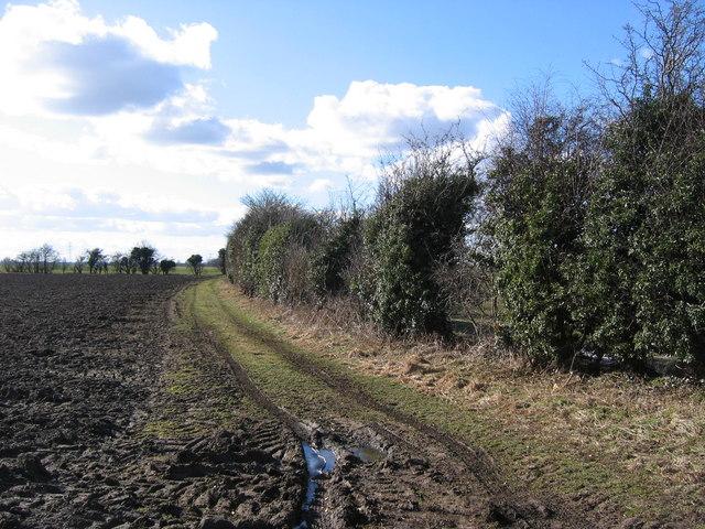 Track Along Field