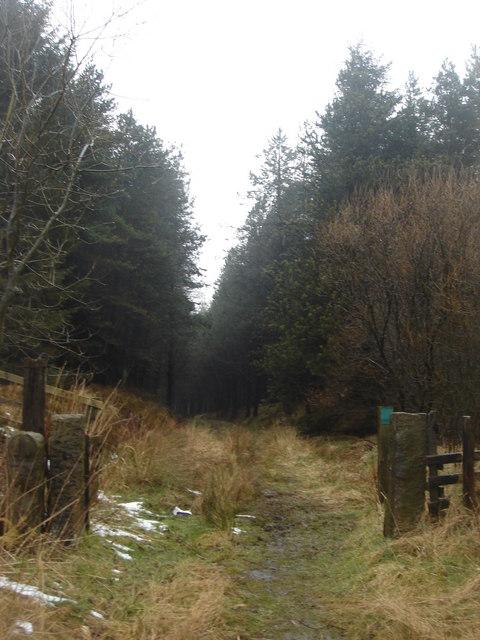 Footpath through Moss Side Plantation