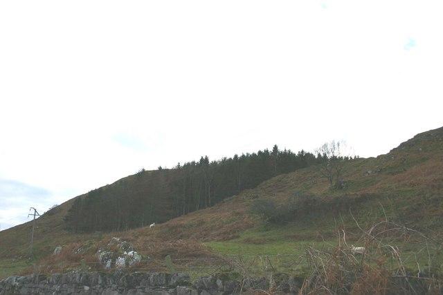 Barr Thormaid Wood south of Tayvallich.
